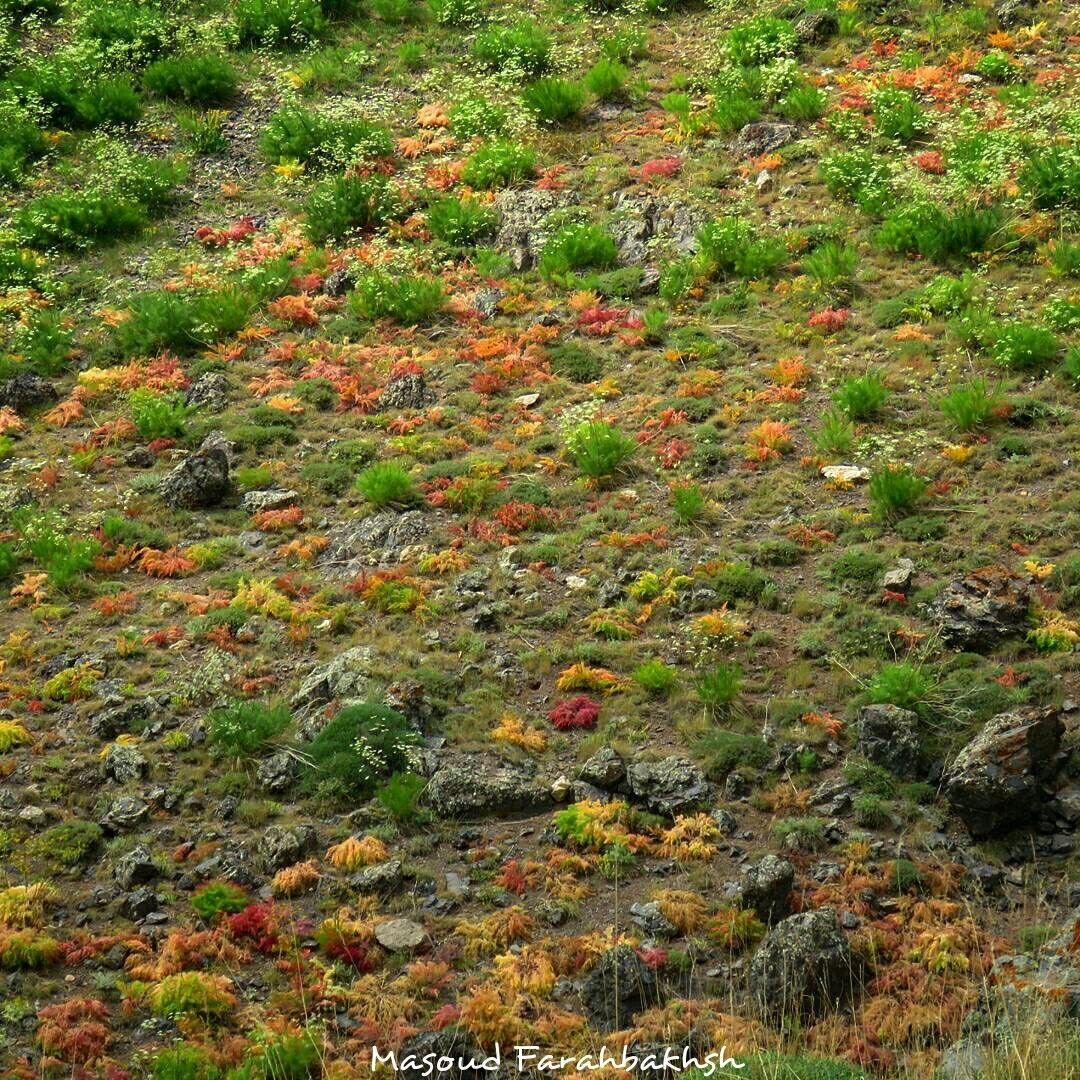 از مراتع پویا و دست نخورده همراه با خاک حاصلخیز در اابرز مرکزی ، عکس از مسعود فدح بخش