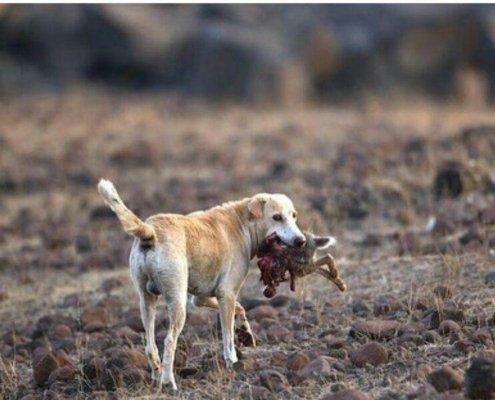 سگ؛ دوست ما یا دشمن ما